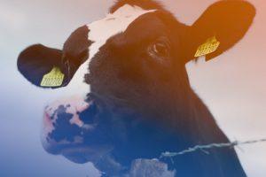 Read more about the article Tiertransporte: Landwirtschaftsministerin Klöckner darf nicht länger tatenlos zusehen!